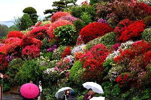 デジカメ大好き…。 皆さん初めまして、福島県は郡山市からの参加です、 昨日の郡山市は一日中雨降りでしたが、隣町の須賀川市