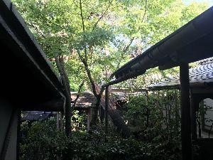 お気楽に生きる。 前略  昨夜は、土砂降りの雨であったが、今日は朝から快晴である。  先々週から先週は、東京・軽井沢・