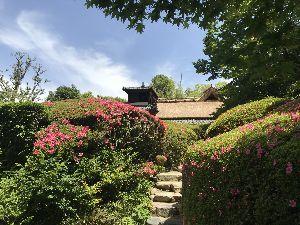 お気楽に生きる。 前略  昨年8月以来の詩仙堂であったが、本堂の屋根や入り口の門の屋根などすっかり改築され、一層綺麗に