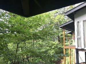 お気楽に生きる。 前略  雨上がりの朝、窓を開ければ木漏れ日が差し、沢の水音が、快く響いている。  今世に生きる淀んだ