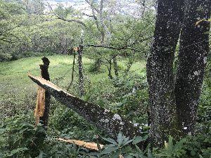 お気楽に生きる。 前略  昨日は、諸用があり信州高遠へ行ったが、此方も台風の被害が出ている様である。  時間があったの