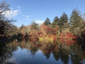 お気楽に生きる。 前略  今日は、午前中は部屋の掃除と山荘の周りの落ち葉掃除であった。  昼食を済ませ、午後は雲場池辺