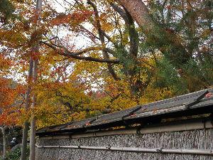 旅で楽しかった事色々! 宝厳院の紅葉  嵯峨に天龍寺があります。その塔頭の紅葉です。