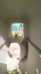 うさぎ好きの株投資家 やっと暖かくなってきました。  ピーターは側溝のトンネルで気持ちよく寝ています。 眩しくないのかな?