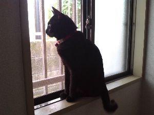 黒猫を飼っている方 今日は猫の日ですね!可愛い画像をアップしてください(*'‐'*)♪