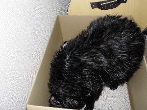 黒猫を飼っている方 お風呂あがり。。。( ̄- ̄)