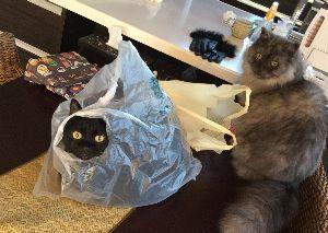 黒猫を飼っている方 我が家にも黒猫とふわふわグレーの猫がいます。 とっても癒されますよね〜
