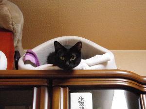 黒猫を飼っている方 袋ニャンコも、ふわふわニャンコもかわいいれす。。( ̄- ̄)w オラのニャンコ、、袋に入ると物凄い悪い
