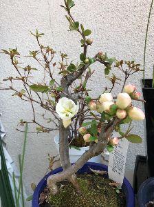 (*^▽^)/★*☆♪独り言(゜∇^d)!! 少し咲き始めています。