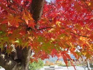 (*^▽^)/★*☆♪独り言(゜∇^d)!! 11月12日 「ビック・アーチ」にて 紅葉 綺麗でしたよ~。 もう、散ってしまったかな~(>_