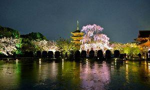 カメラもってぶらぶら こんばんわ  素朴な疑問 ありがとう  優~♪なりの撮影  京都の観光地有名な場所では まず  人が