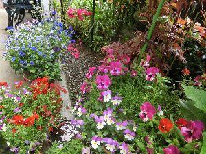 おはようございます~♪ 散歩道     花は季節に         彩りを   寅さんすずさん おはようございます。   雨