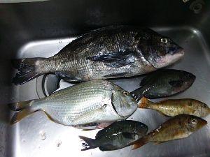 平日ポン円、土日は釣り 先週末の釣果。 フエフキダイが入れ食いだったが、クセがあって好きでないので、ほとんどポイした。(-.