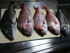 平日ポン円、土日は釣り 連休中の釣果。 塩焼サイズの丁度良いタイとチヌだった。