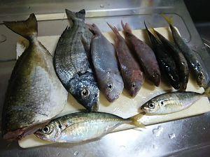 平日ポン円、土日は釣り この堤防は、色んな魚種が釣れるみたいだ。 隣のサビキ釣りには、アラカブ、カワハギ、カマス等も釣れてた