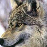 銀狼Ⅴ(5)