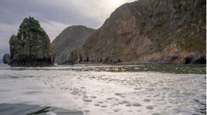 来週のレンジ予想 【カムチャツカ海洋汚染】 ロシアのカムチャツカ地方で、大量の海洋生物の死骸が打ち上げられた。  原因