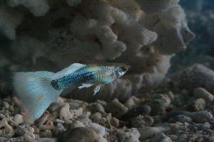 老後を楽しく やっと一枚。稚魚は小さいので、撮るのは難しい。