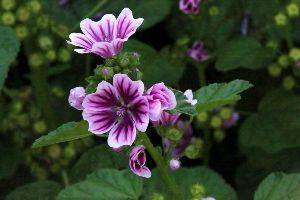老後を楽しく 道端の花