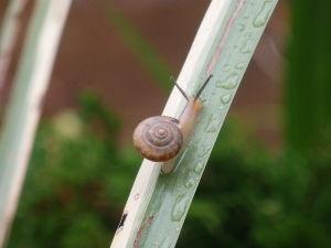 庭で見つけた小さな生き物 梅雨らしくカタツムリ