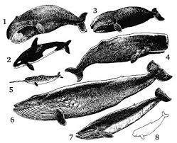 ミ☆しりとり☆彡 クジラ