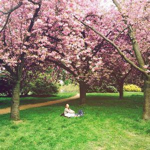 ♪ふる里を愛する人は~心清き人~ テンさん・・・・こんにちは♪  造幣局の桜の通り抜けもおわりましたが。   孫娘がロンドンからバルセ
