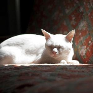 陽だまりに猫♪ ぽかぽか