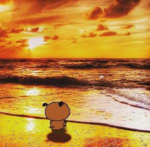 シロジロウキャピタルファンド✌️ 夕日素敵🌇🌅