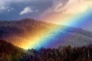 ビアンの診察室 今日のクイズⅡ  虹の麓には何が埋まっているでしょう?  ① 宝物  ② ゴミ  ③ シ体  ④ あ