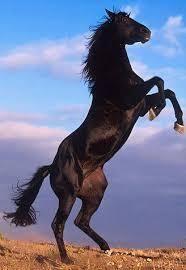3387 - (株)クリエイト・レストランツ・ホールディングス お馬も喜んでいます。 ヒヒ~ン