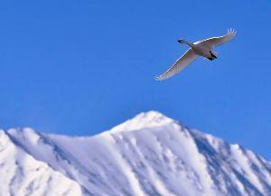 4884 - クリングルファーマ(株) 「グレイト・スピリッツは誰もに美しさを見る。烏が鷲になる必要はない。」  【スクァミッシュ族】