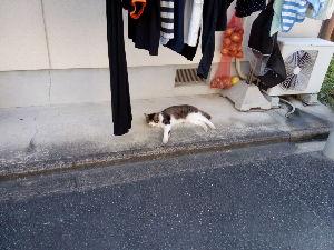 関西で撮影しましょう とんでもないこの夏の暑さ、 猫も出来るだけ涼しい場所を選んでる。