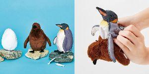 3396 - (株)フェリシモ まあまあおもしろいねWWW 海遊館とコラボ  --------  海遊館のペンギン飼育員のこだわりを