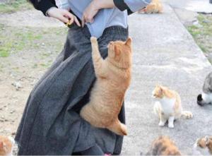 4588 - オンコリスバイオファーマ(株) 風が吹かなくても 猫に頼めばチャンスありそうです