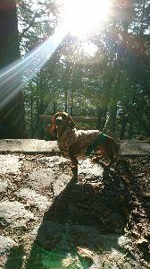 4594 - ブライトパス・バイオ(株) 山の神様にお参りしてきました。 秩父の三峯神社はお犬様信仰の地であるため、代表の子を連れて行きました