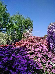 初pc50~60代の方の談話室 こんばんわ! 足利に行ってきました。 フラワーパークに。 藤の花が満開に!  藤は映ってませんね。