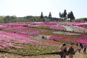 中高年ゴルフ(関越、東北、常磐道沿線) newokaさん,メイトさん、みやさん それでは富貴でお会いしましょう。  今日は秩父の芝さくらを見