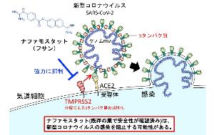 4541 - 日医工(株) 昨晩、NHKで、アビガンもフサンも出て来て、アビガンは初期に、 フサンは血栓等、血管系の改善に効くと
