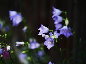 ☆東北の写真仲間大募集!!☆ みなさん、こんにちは。  土日は、枯れた薔薇一番花を摘み取る作業に没頭しておりました。そのためせっか