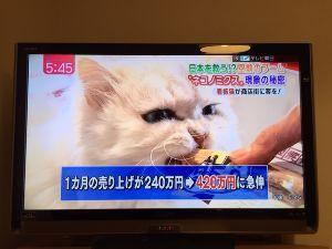 8230 - (株)はせがわ やはり、ネコの墓に力を入れるべきだな。