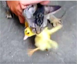 地域ぐるみで野良猫駆除を考えよう 猫えさやり大悪党からの餌だけでは物足りない