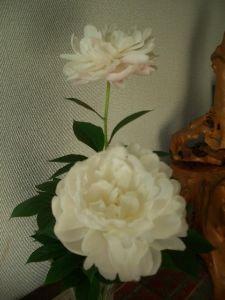 60代の人お話しませんか 、 我が家の庭の芍薬が綺麗に咲きましたので玄関に切り花として飾りました。