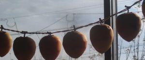 井戸端会議 おはようございます 今日もいいお天気ですね  きたきつねさん、秋晴れの中の紅葉ドライヴ楽しまれたのね