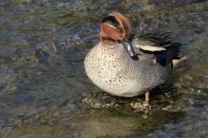 R40 川崎 溝の口~町田近辺OFF会 8月限定 おはようございます。元気ですか、写真は家の前で泳いでいる鴨です。 本日も突発オフ開催予定。町田ですお