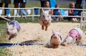 2432 - (株)ディー・エヌ・エー この人、ジョッキーなん? ビシビシ鞭入れて欲しいッス🤤 不肖豚丸、上がり33秒台の脚持ってますよ🐷