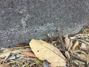 ゆっくり更新中! 蛾はきもすぎて撮ってない笑 ちっちゃいヘビが居たよ(;^_^A  セミが死んでると夏も終わりって感じ
