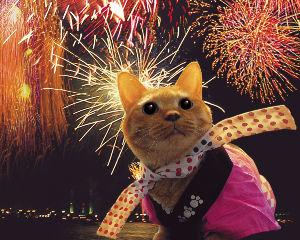 禅:ひっこししました      猫魅入るやがて寂しき花火かな