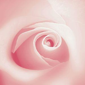 ☆ 一行の言葉 ☆ 春の花びら 手のひらに そっと 懐かしさ愛しさに  つぶやきさせて頂きました (≧▽≦)/