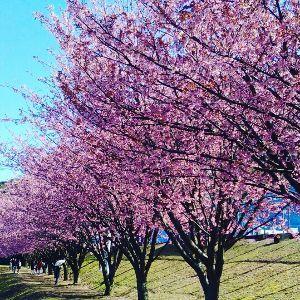 こん☆ やっと春らしくなってきたね♪ まだ風は冷たいけれど 日向におったらぽかぽかやぁヽ(^。^)ノ