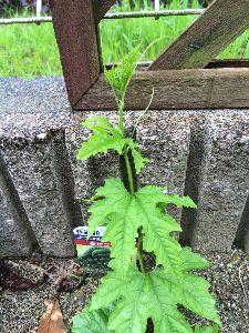 笑わせてくれる人〜(≧∇≦)/一緒に笑ってくれる人♪ 見てみてぇ〜〜〜o(^▽^)o  庭に植えたゴーヤが頑張って ツルを巻き付けようとしてるぅ〜♪  い
